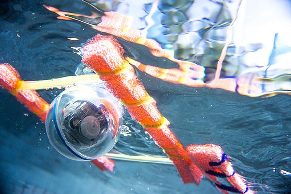 sphero-sprk+-waterproof