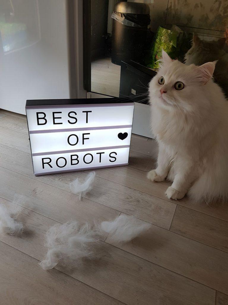 participant concours journée internationale du chat amibot