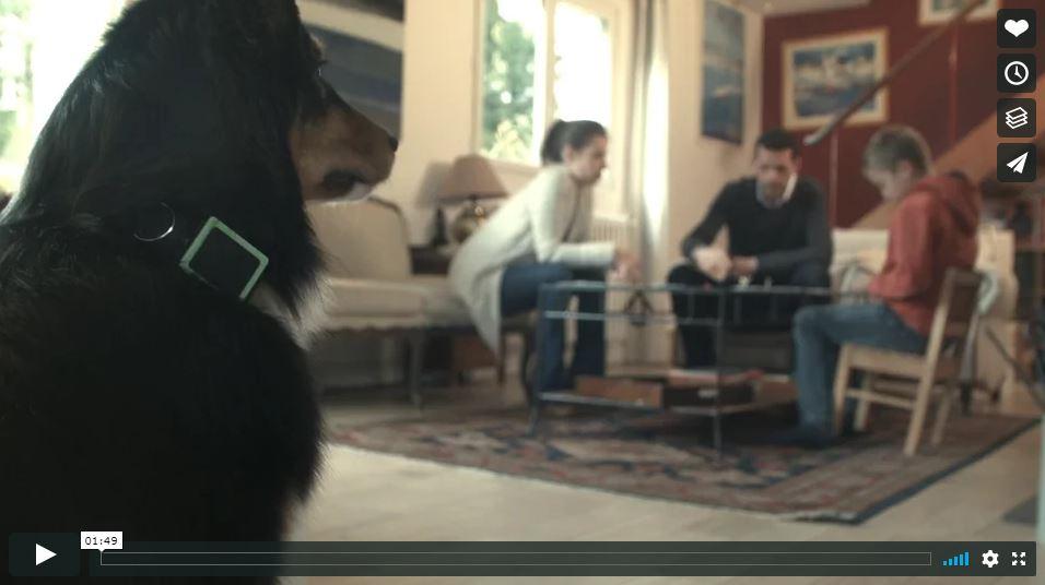 video weenect collier gps chien