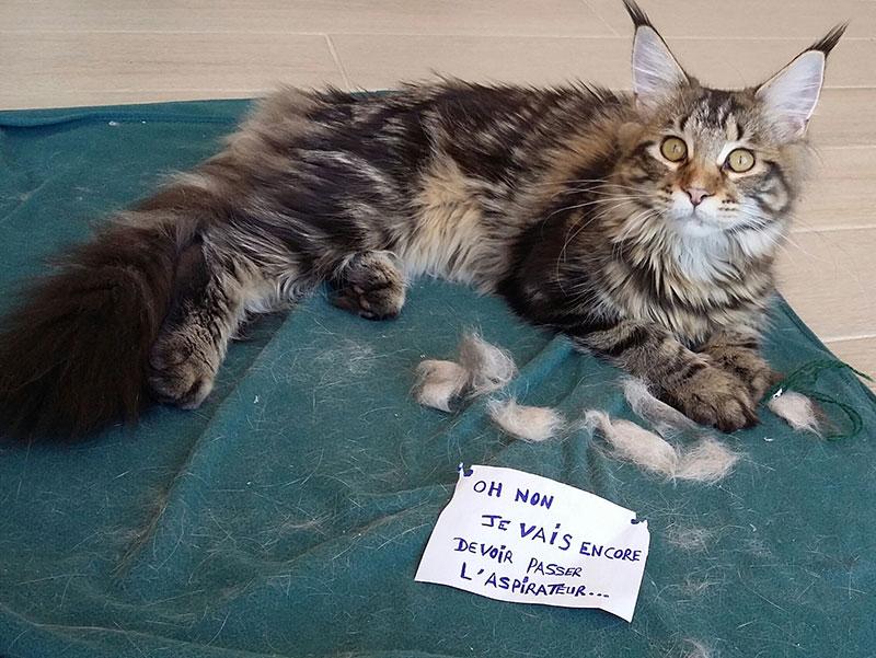 Gagnant concours journée internationale du chat amibot prime