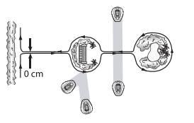 R80Li schema