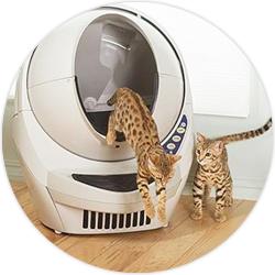 litter robot litière chats