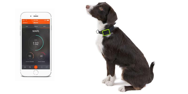WEENECT Pets, collier GPS pour chien connecté
